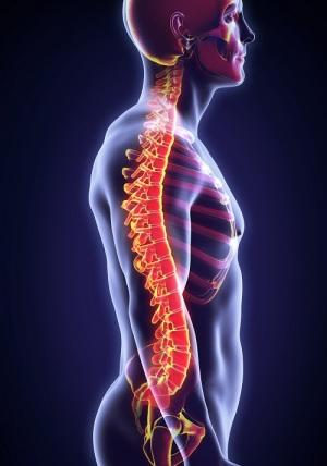 Skeleton With Spine